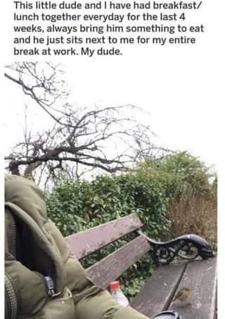 May be an image of tree and text that says 'This little dude and have had breakfast/ lunch together everyday for the last 4 weeks, always bring him something to eat and he just sits next to me for my entire break at work. My dude.'